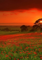autumn, sun, flowers