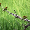 birds, color, branch