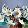 daisies, flowers, basket
