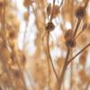 grass, twig, dry