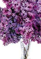 lilacs, bunch, vase