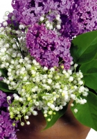 lilys of the valley, lilac, leaves