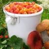mushrooms, berries, bucket