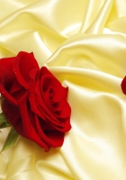 roses, red, flowers