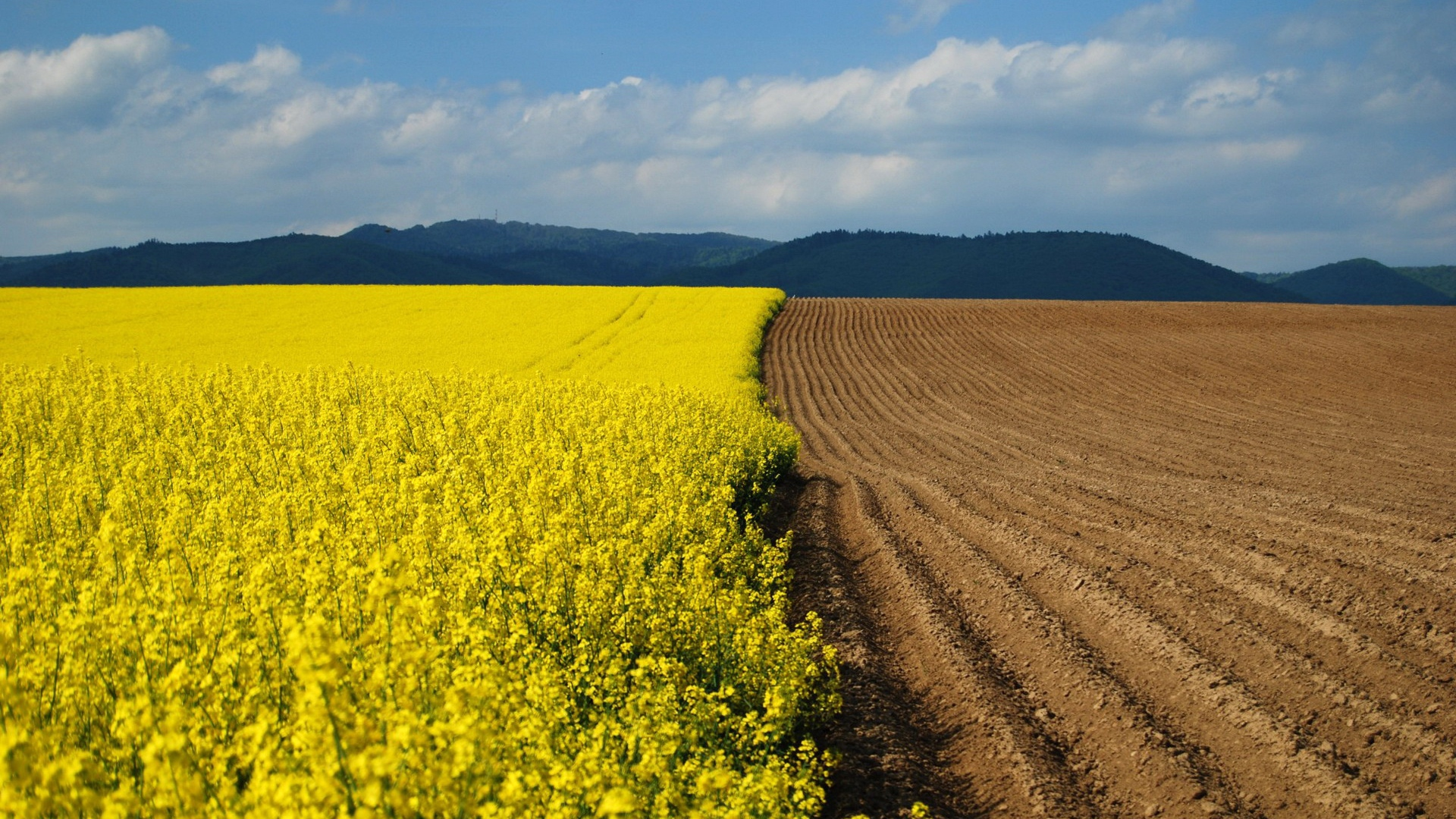 Download Wallpaper 1920x1080 arable land, earth, flowers ...