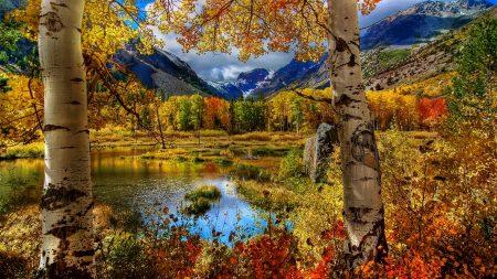 autumn, birch, color