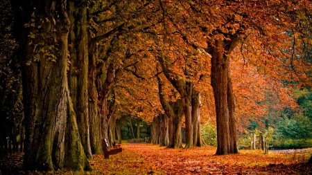 autumn, leaves, park