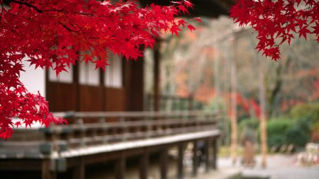 autumn, leaves, red