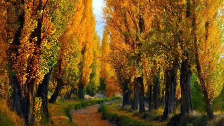 autumn, nature, landscape