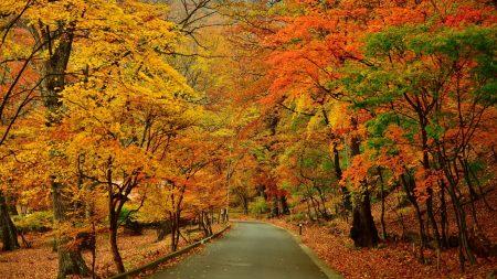 autumn, park, trees