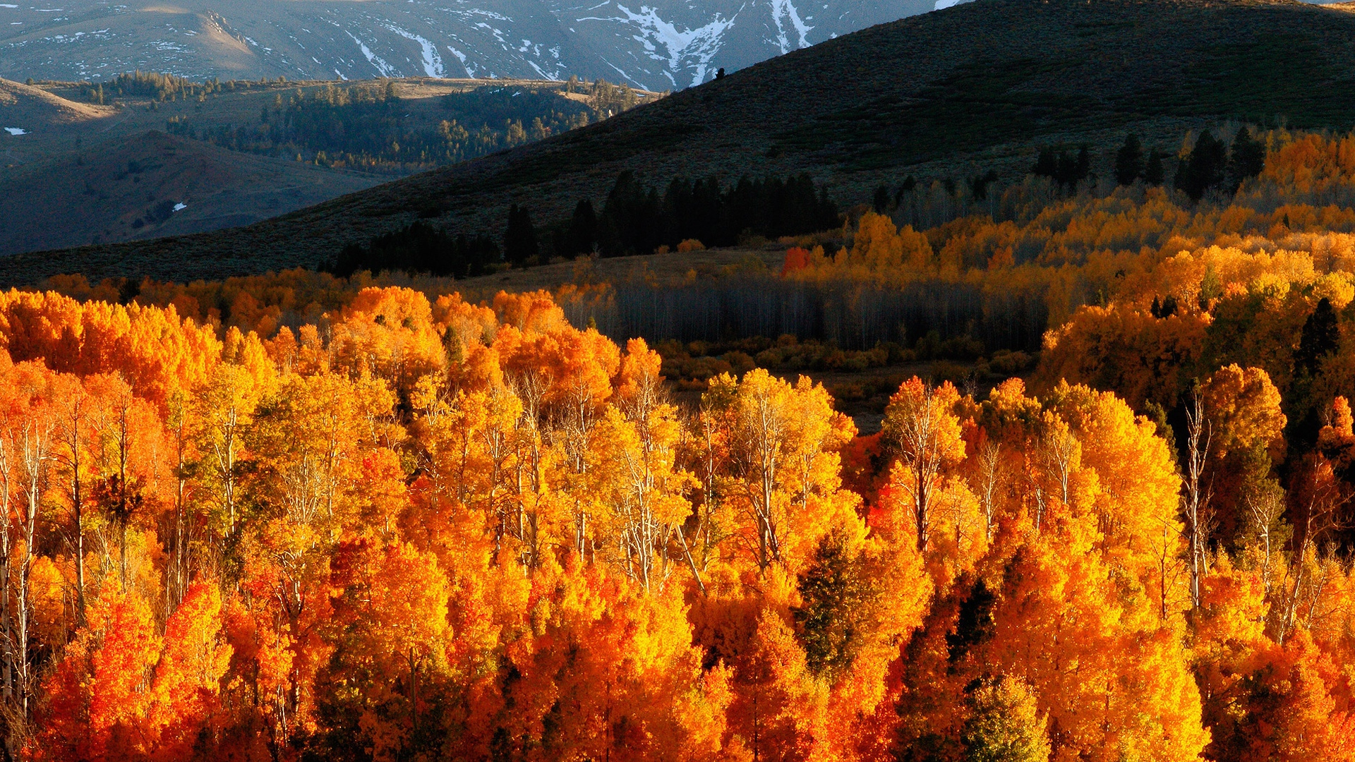 Download Wallpaper 1920x1080 Autumn Trees Gold Mountains Light Hills Slopes October Full HD 1080p Background