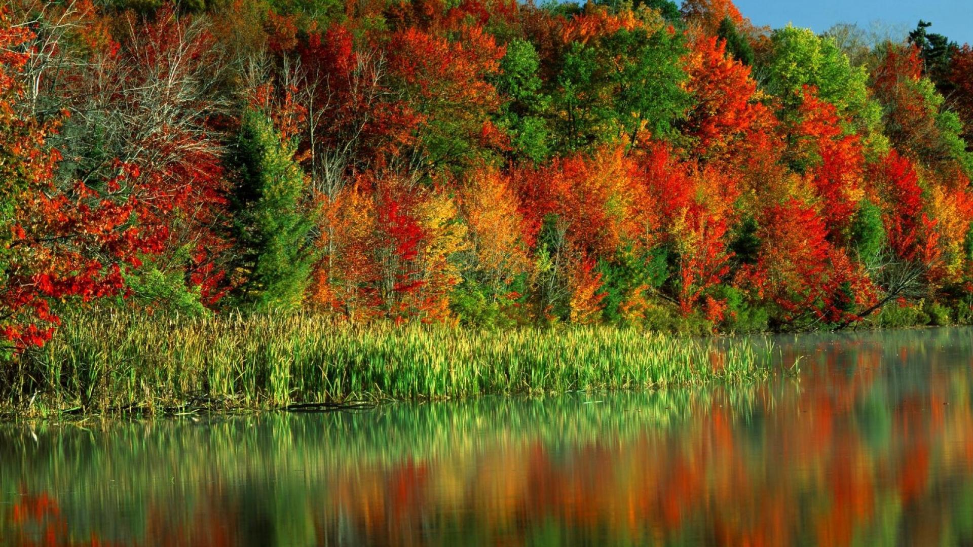 Download Wallpaper 1920x1080 autumn, trees, paints, leaves, multi ...