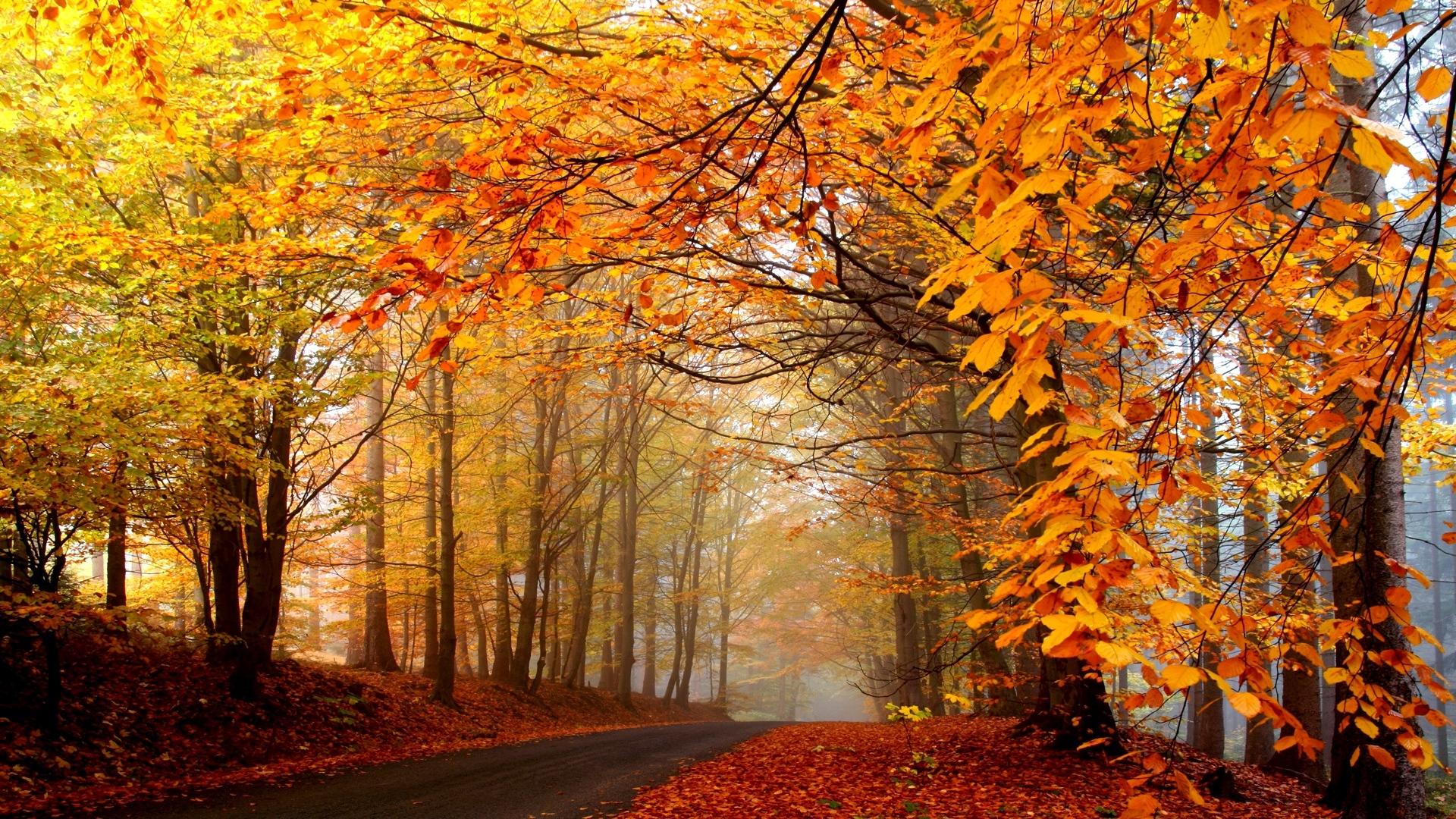 download wallpaper 1920x1080 autumn, trees, road, fog, haze, asphalt
