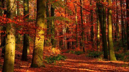 autumn, wood, leaves
