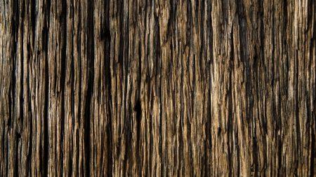 bark, wood, background