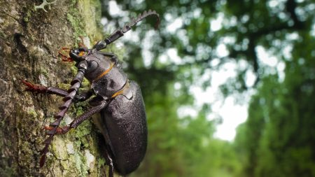beetle, wood, bark