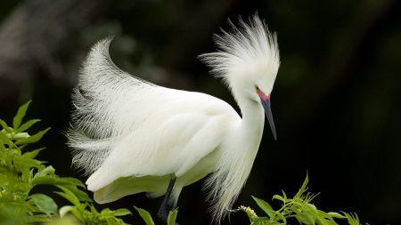 bird, white, beautiful