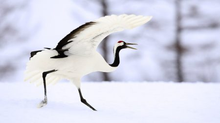 bird, white, snow