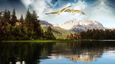 birds, flight, lake