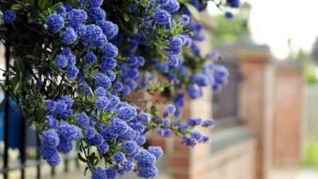 blooms, shrubs, fences