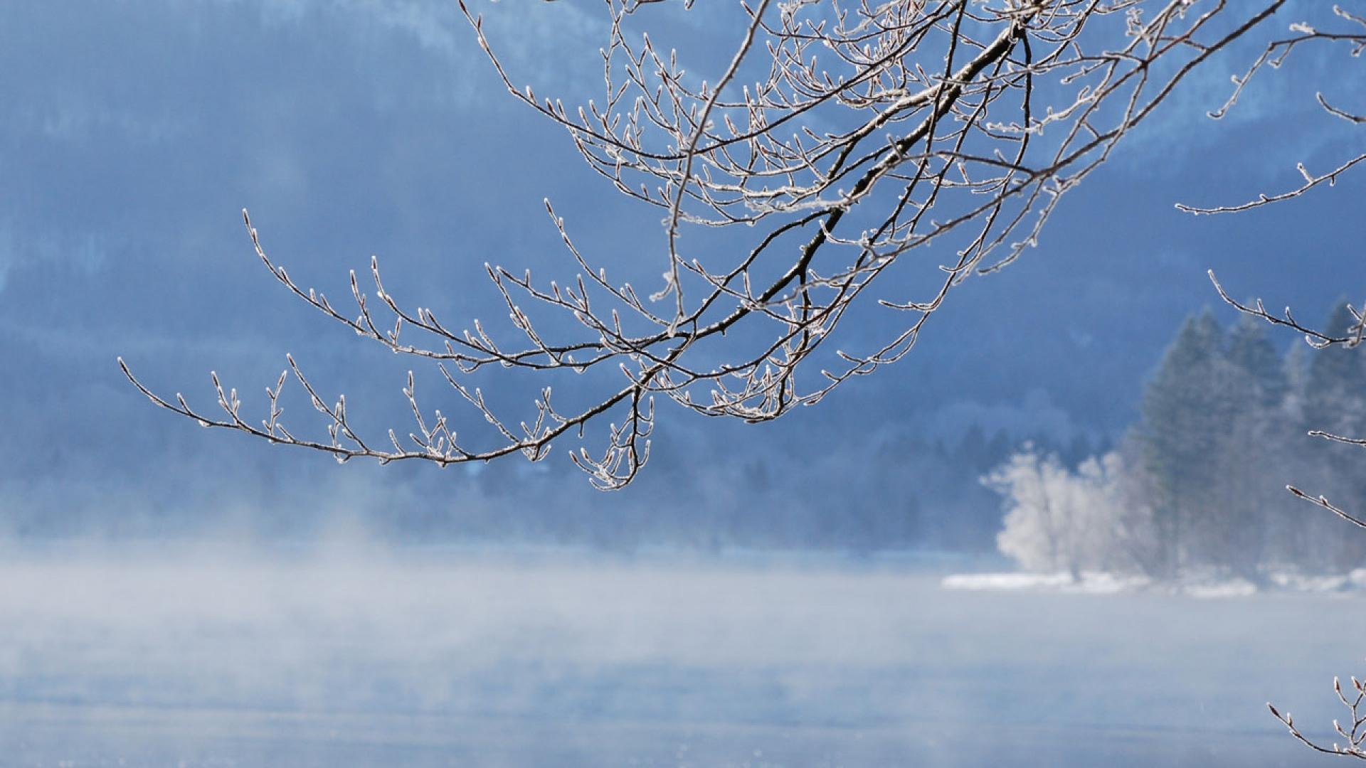 Download Wallpaper 1920x1080 branch, water, tree, winter ...