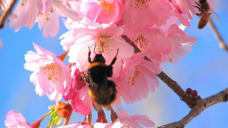 bumblebee, flight, flowers