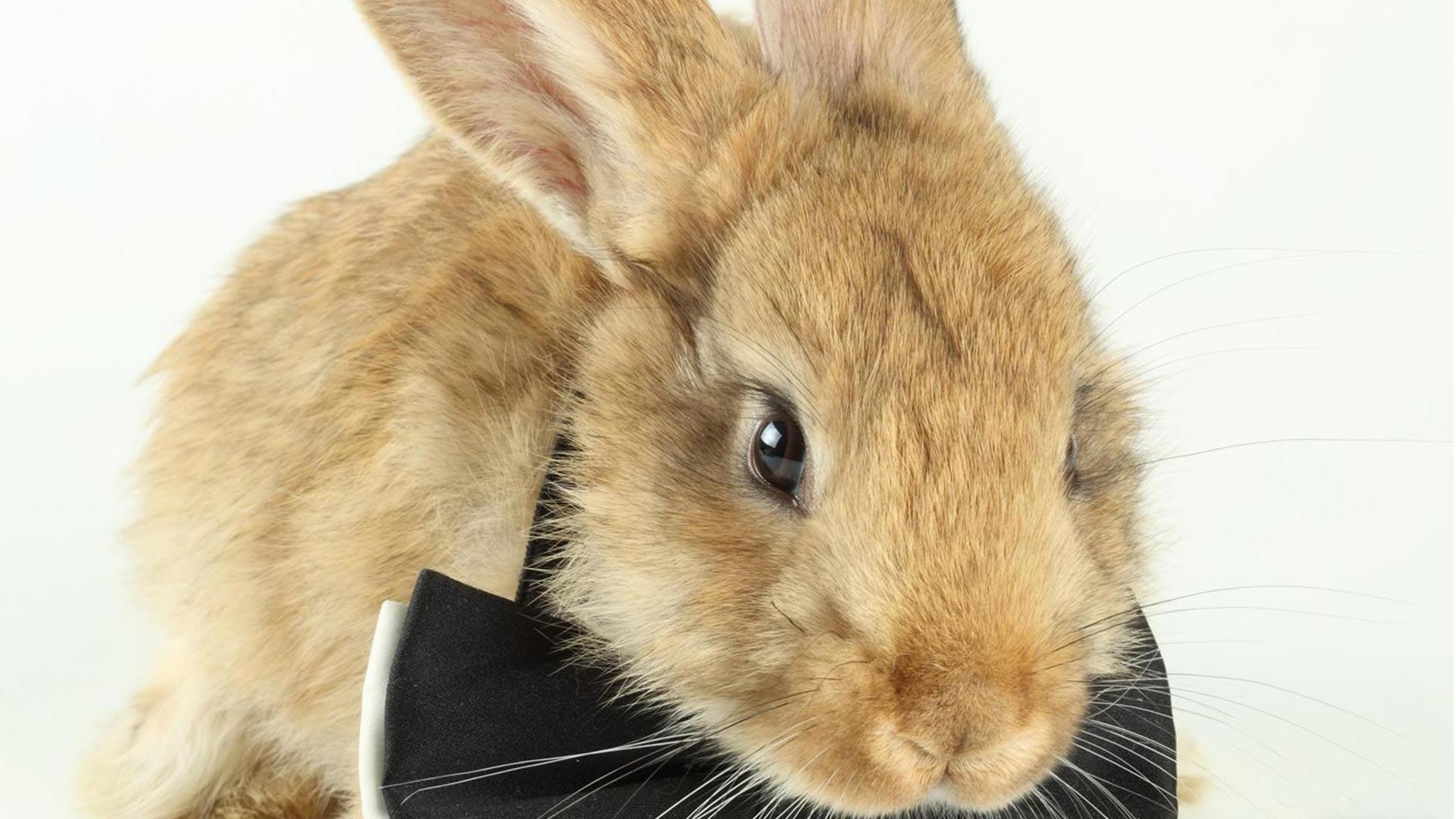 Download wallpaper 1920x1080 playboy logo bunny symbol full hd playboy x gta 4 grand theft auto 4 bunny bow hair voltagebd Image collections