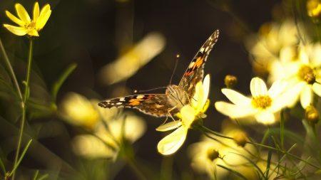 butterflies, flowers, bright