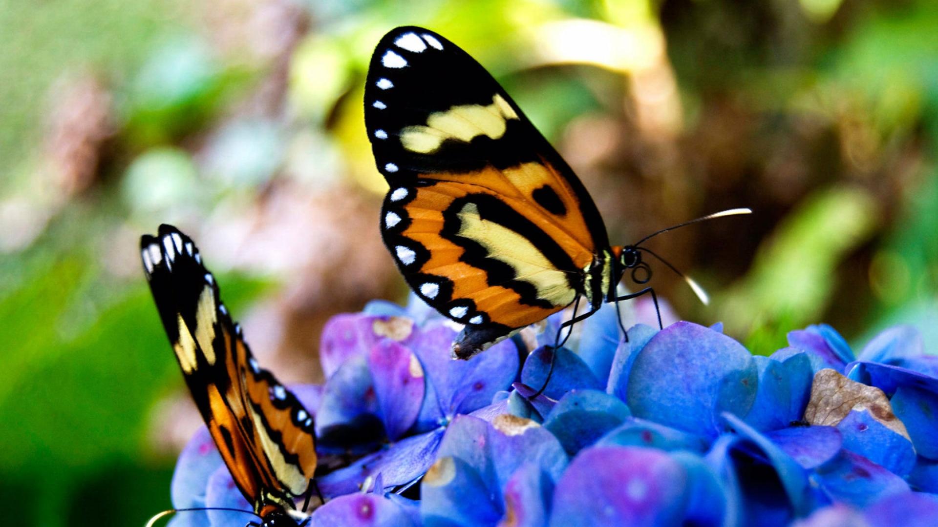 download wallpaper 1920x1080 butterflies flowers grass plants