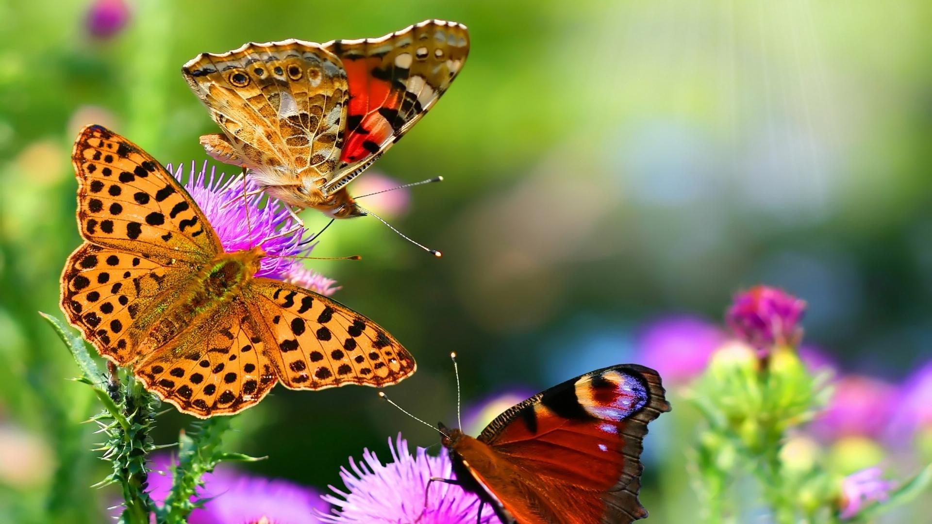 Для всех любителей прекрасного и красивого подборка очень красивых фото