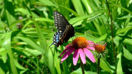 butterfly, flight, flower