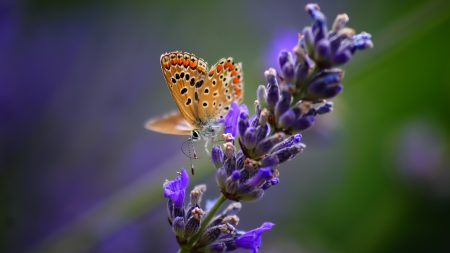 butterfly, flower, bright