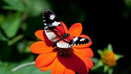 butterfly, flower, flight