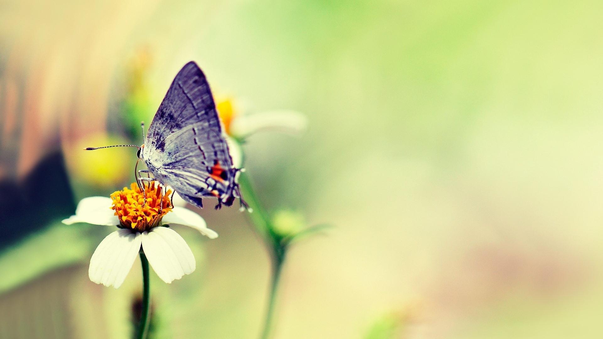 Download Wallpaper 1920x1080 Butterfly Flower Glare Flight Paint