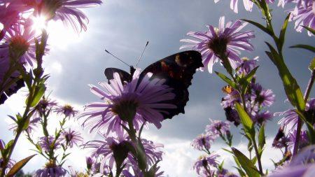 butterfly, flowers, sun