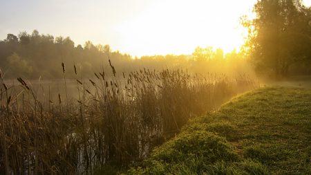 canes, lake, morning