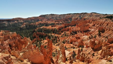 canyons, height, trees