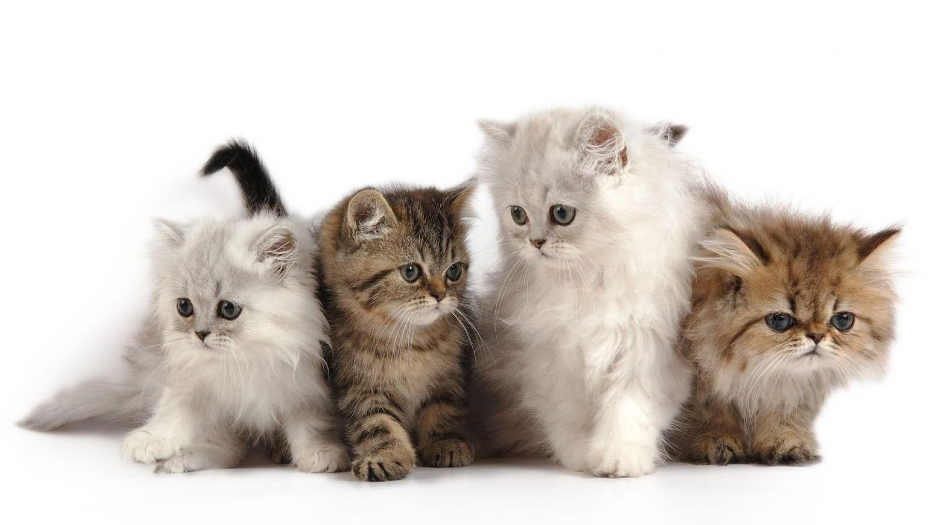 Get The Latest Cat Cats Kitten News Pictures And Videos Learn All About From Wallpapers4uorg Your Wallpaper Source