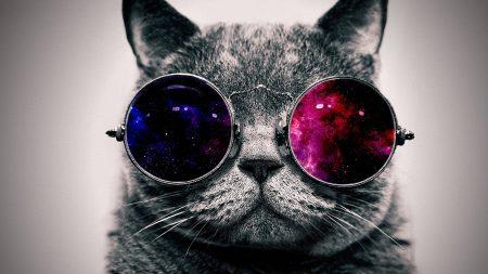cat, face, glasses