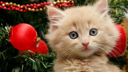 cat, fluffy, new year