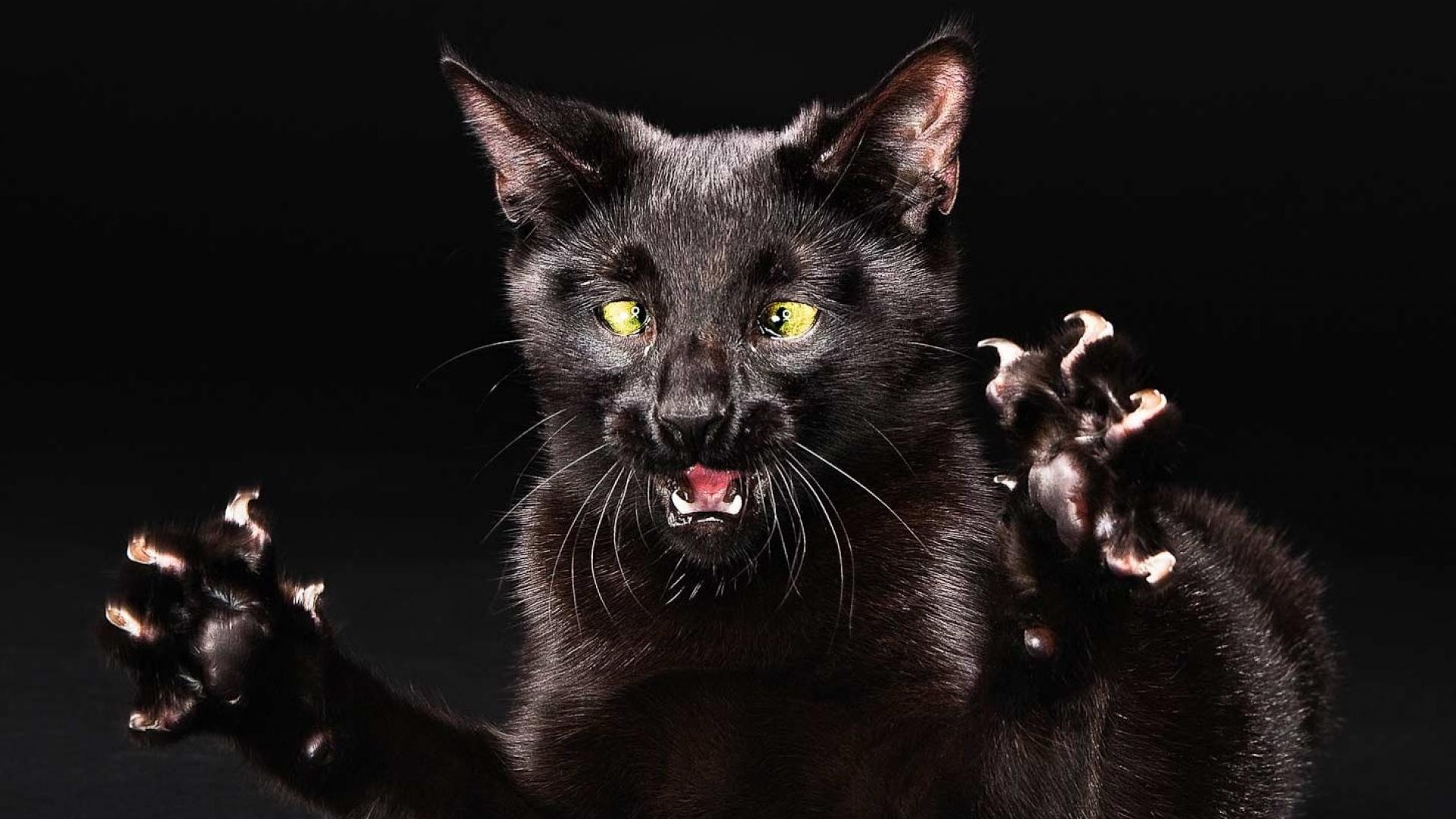Download Wallpaper 1920x1080 Cat Funny Black Legs Full HD 1080p