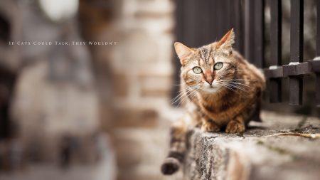 cat, street, lie