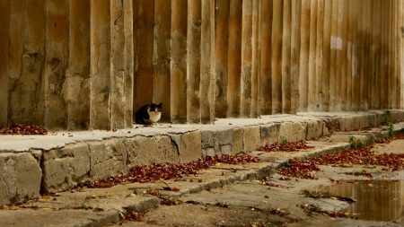 cat, street, sit