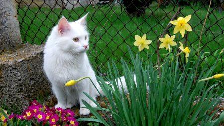 cat, white cat, flowers