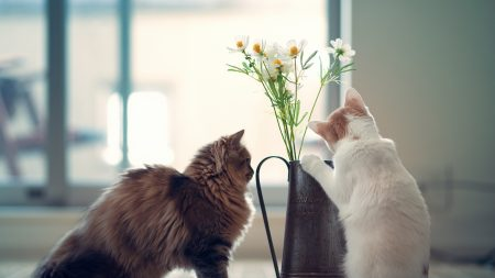cats, couple, vase