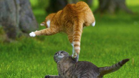 cats, kittens, playful