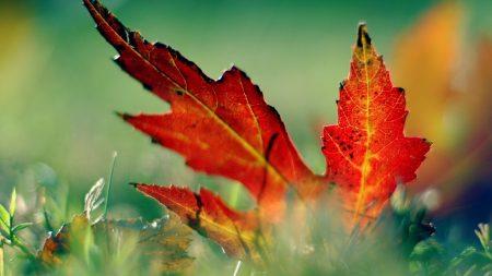 close-up, leaf, autumn