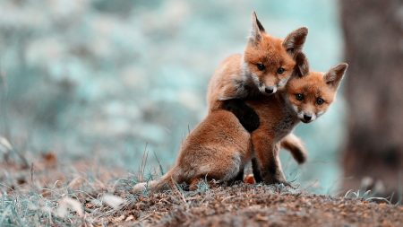 cubs, couple, caring