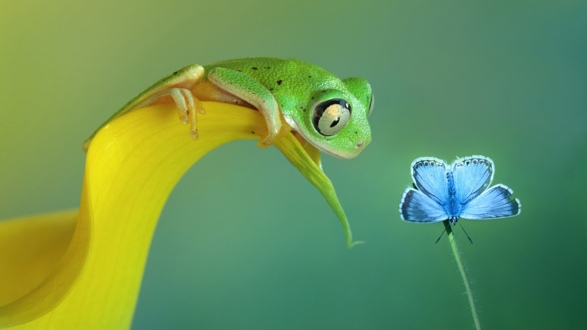 Get The Latest Curiosity Butterfly Frog News Pictures And Videos Learn All About From Wallpapers4uorg Your Wallpaper