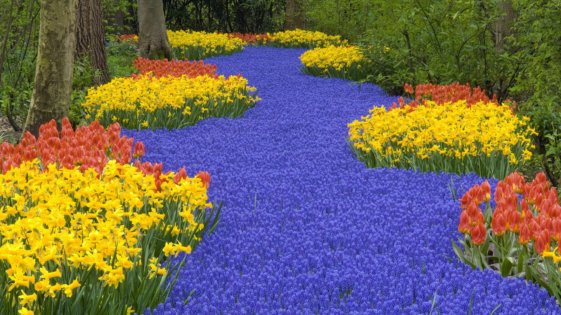 download wallpaper 1920x1080 daffodils, tulips, muscari, chamomile